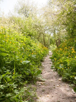 spring footpath passage trek trail through grove meadow wildflowers spring new fresh light day; essex; england; uk
