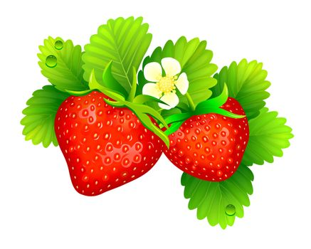 Strawberry with leaves on a white background. A strawberry bush on a white background.