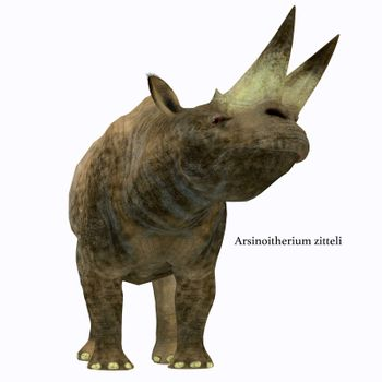 Arsinoitherium was a herbivorous rhinoceros-like mammal that lived in Africa in the Early Oligocene Period.
