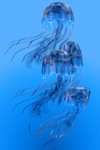 Several Blue Spotted jellyfish swim together in a group bloom in clear ocean waters.
