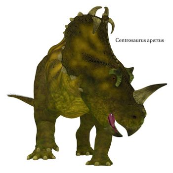 Centrosaurus is a herbivorous Ceratopsian dinosaur that lived in Canada in the Cretaceous Period.