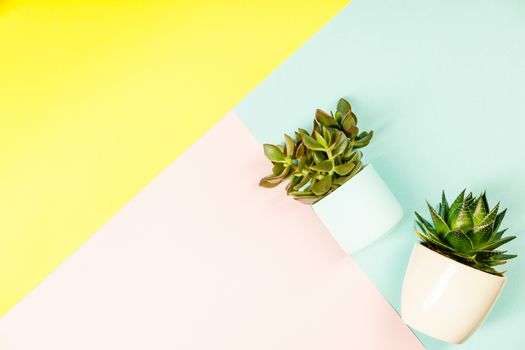 Succulents on pastel colors background