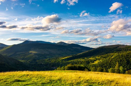 beautiful mountain landscape in afternoon. grassy meadow and forested hills of Carpathian mountains. Pikui mountain in the far distance. gorgeous blue sky with golden clouds
