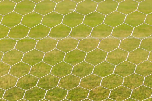 Green grass on the football field