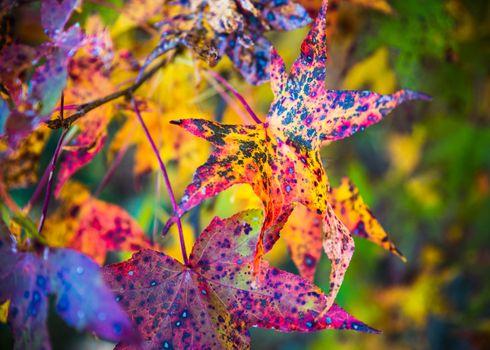 Closeup shot of colorful fall foliage