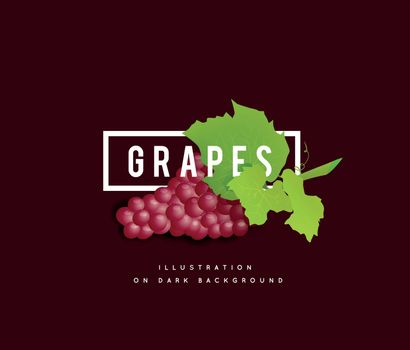 Grape branch with red grapes on white background. Vector illustration on dark background