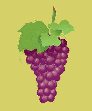 Grape branch with red grapes on white background. Vector illustration on light background