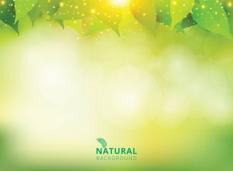 Spring summer natural green background with leaves and lighting effect. Vector illustration