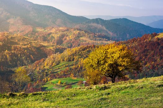 tree on a grassy hillside in autumn mountains. beautiful scenery at sunrise. small village down the hill in valley