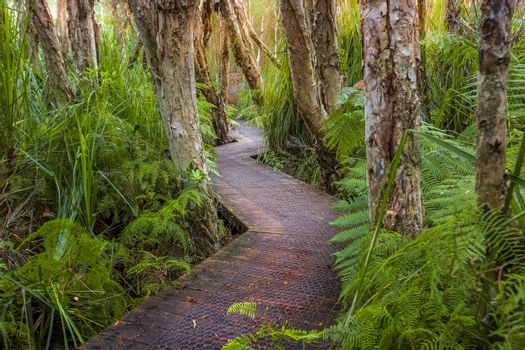 Exploring Victoria.  Hiking along a boardwalk through the lush coastal rainforest and swamp lands after a long 4wd track in to this remote wilderness.  Victorial Australia