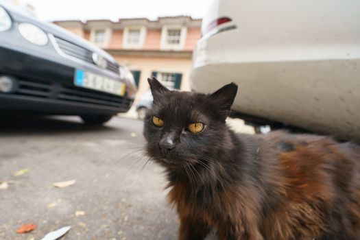 Cat walking on the city street