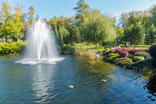 Lake with waterfowl ducks and a large beautiful fountain in the