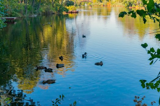 The sun reflected in the lake with waterfowl ducks and decorativ