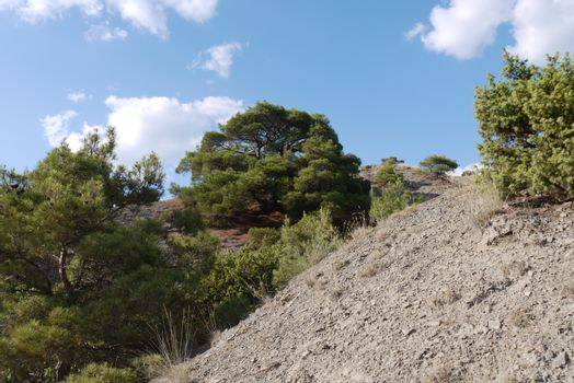 A large broad tree on a steep slope covered with grass on the background of a blue sky