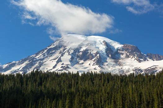 Mount Rainier in National Park amongst evergreen trees with blue sky and white clouds closeup