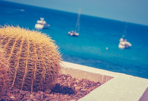 Retro Style Luxury Yachts In A Tropical Marina With A Cactus In The Foreground