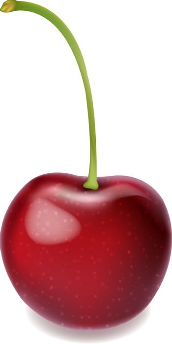 Red Cherry Isolated White Background With Gradient Mesh, Vector Illustration
