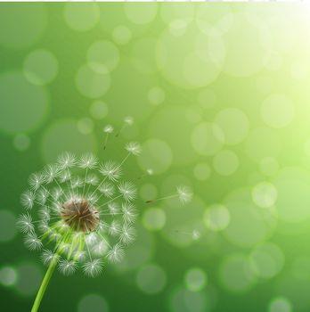 Dandelion And Summer Background
