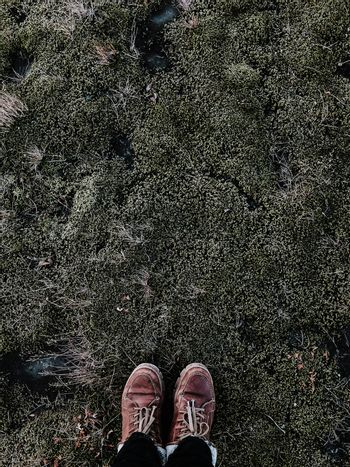 Stand on moss