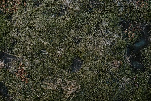 Moss ground in Iceland