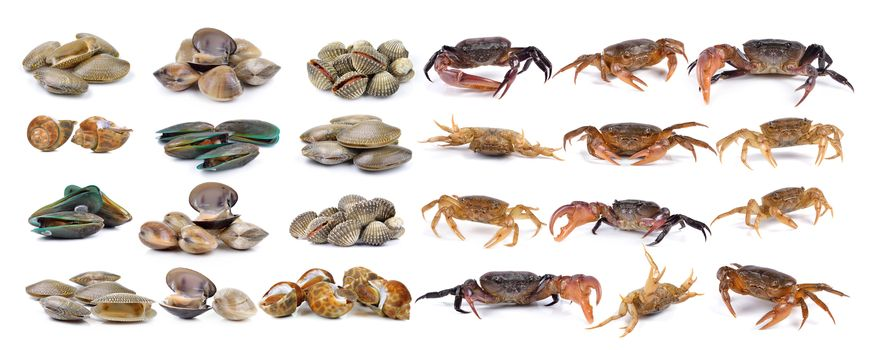 crab and enamel venus shell, Clam shellfish, Surf clam, mussel,  spotted babylon on white background