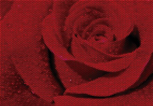 Red Rose Dotted Vector Illustration