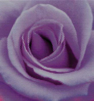 Purple Rose Dotted Vector Illustration