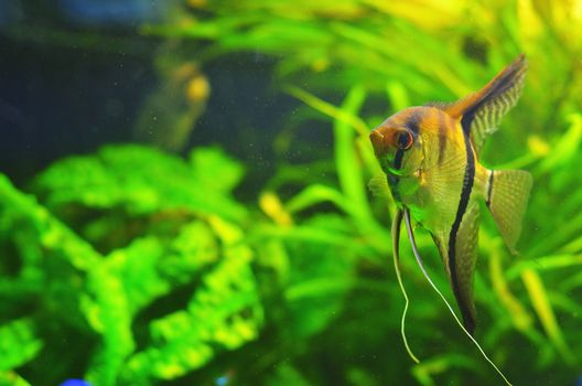 Striped fish with transparent fins and whiskers