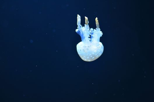 A white jellyfish with big tentacles floats down