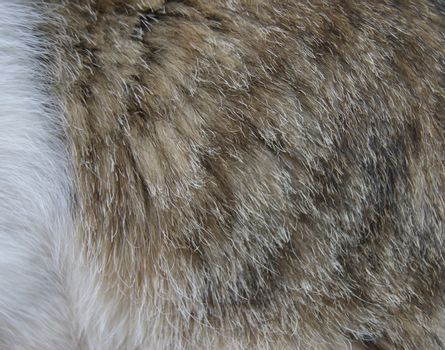 Varicoloured hair cover home animal cat.Skin of the cat background