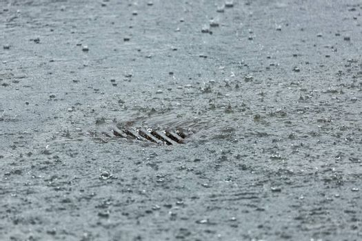 Rainwater Flowing into Storm drain close up.