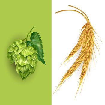 Hops and malt illustration