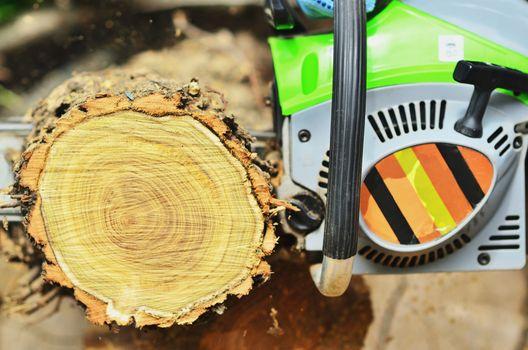 Chainsaw saws a large log, cut a deck