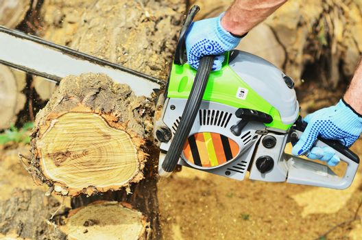 A man saws off a piece of a log with a chainsaw
