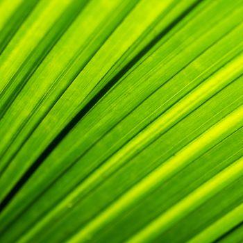 Macro shot of backlit green foliage texture