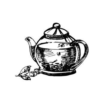 Hand Drawn Sketch of Teapot. Vintage Sketch. Great for Banner, Label, Poster