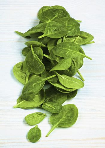 Small Raw Spinach Leafs In a Row closeup on Light Blue Wooden background