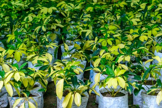 Nursery plant in bags containing high nutrient soil.