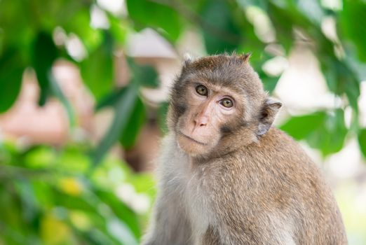 Brown monkey inclined his neck to look suspiciously stare at the camera