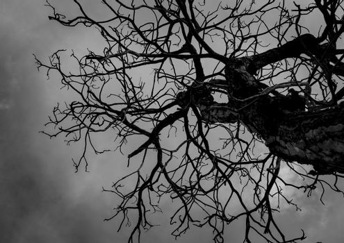 Silhouette dead tree on dark sky background for scary or death. Hopeless and despair concept.