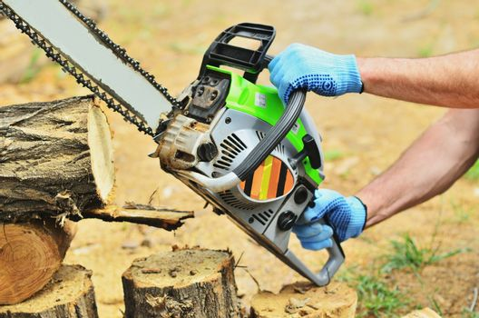 A man saws chainsaws from a tree, works in mittens