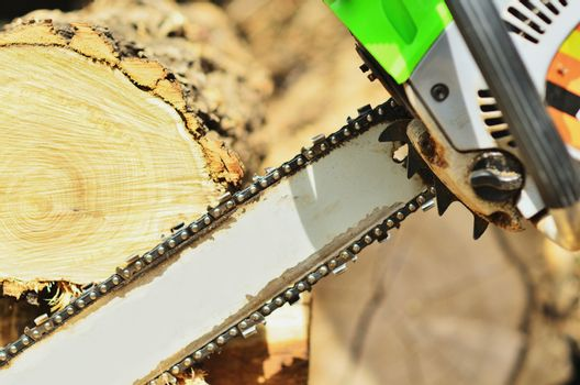 Chainsaw saws wood in sunlight, close-up photo
