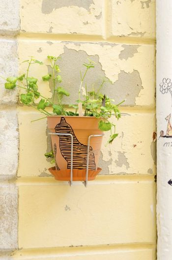 Traditional old Krk town architecture. View of ornate flower pot with a cat drawn on an old yellow stone wall at the medieval ancient capital centre.