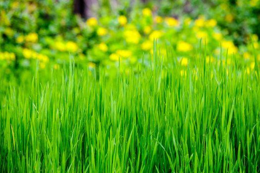 grass on forest glade closeup