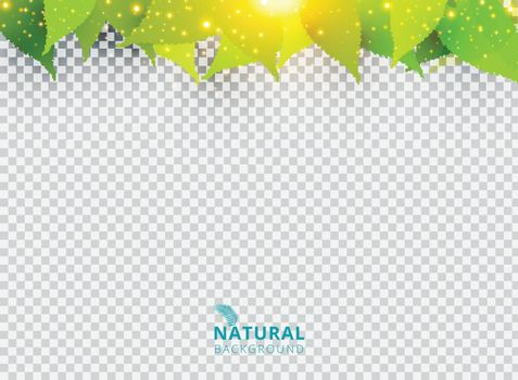 Spring summer natural green background with leaves and lighting effect on transparent background. Vector illustration