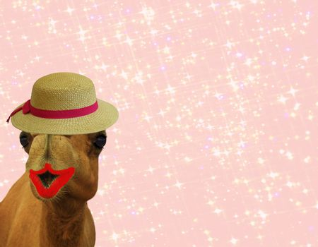 funny camel in make up with lipstick eye lashes and straw hat isolated on pink glittery girly background