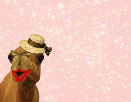 hilarious camel wearing makeup and a straw hat isolated on a girly glittery pink background