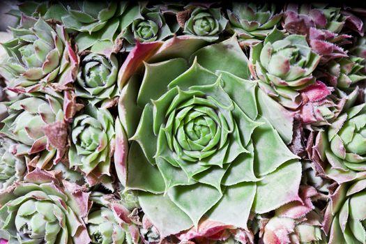 Cactus succulents overhead.