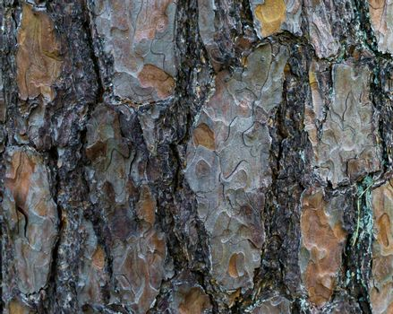a tree trunk with large bark in macro closeup natural forest background texture