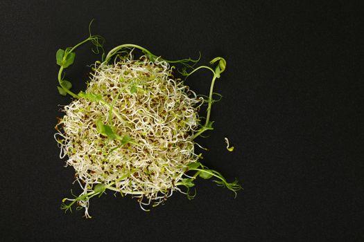 Fresh microgreen salad sprouts on black board